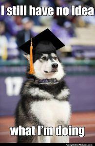 graduation-dog-1